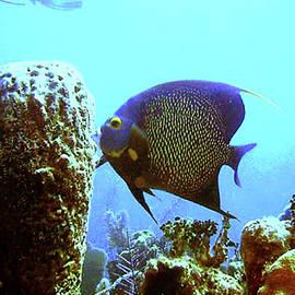 Barry Jones - On the Reef