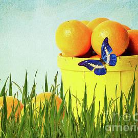 Angela Doelling AD DESIGN Photo and PhotoArt - Orange