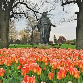 Michael Peychich - Orange Emperor Tulips