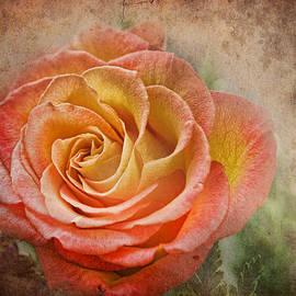 Norma Warden - Orange Rose
