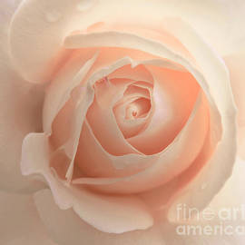 Jennie Marie Schell - Orange Rose with Raindrops