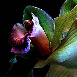 Shirley Sirois - Orchid Gem