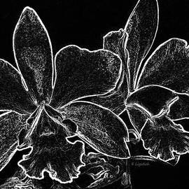 Kerri Ligatich - Orchids - Black and White Abstract