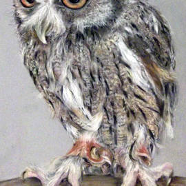 Tanya Patey - Owl