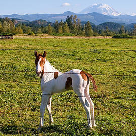 Stacey Lynn Payne - Paint Colt and Mount Rainier