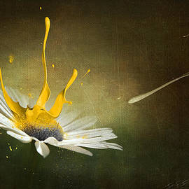 Svetlana Sewell - Painting Daisy