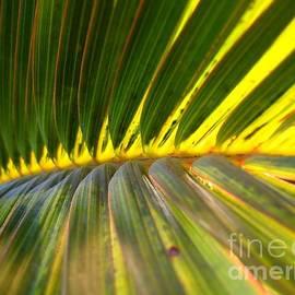 Yali Shi - Palm Fronds Illuminated by the Sun