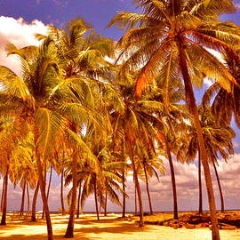 Valerie Rosen - Palms on Half Moon Caye II