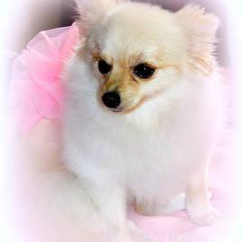 Kathy  White - Pampered Pomeranian