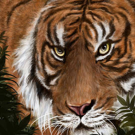 Arin Rajawali - Pantera Tigris Sumatrae