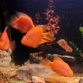 Val Oconnor - Parrot Fish