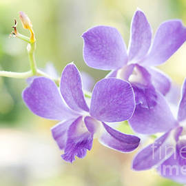 Jenny Rainbow - Passion for Flowers. Purple Orchids