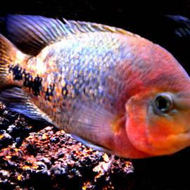 Colette V Hera  Guggenheim  - Peacefull Fish Swim  around  in Denmark