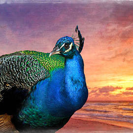Debra and Dave Vanderlaan - Peacock in Paradise