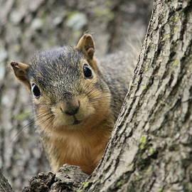 Rosanne Jordan - Peek a Boo Squirrel