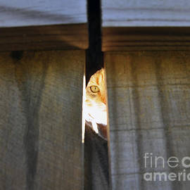 Al Powell Photography USA - Peeping Tomcat