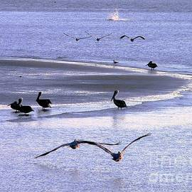 Al Powell Photography USA - Pelican Island