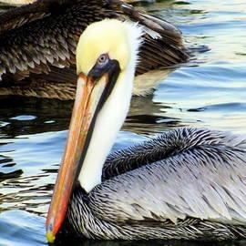 Karen Wiles - Pelican Pete