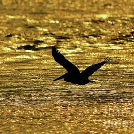 Al Powell Photography USA - Pelican Silhouette - Golden Gulf