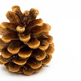 Jean Noren - Pine cone