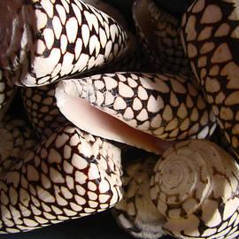 Kym Backland - Pine Cone Shaped Shells