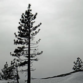 Frank Wilson - Pine In Snow