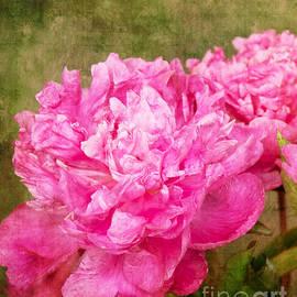 Bob and Nancy Kendrick - Pink Peony Texture 3