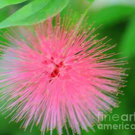 Kathleen Struckle - Pink Spikes
