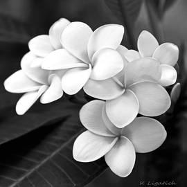 Kerri Ligatich - Plumeria - Black and White