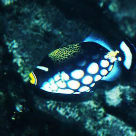 DiDi Higginbotham - Polka Dot Fish