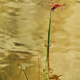 Donna Swiecichowski - Pond Angel