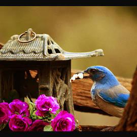 Susanne Still - Popcorn at Birdhouse Cafe