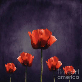 Variance Collections - Poppies Fun 01b