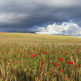 Guido Montanes Castillo - Poppies under the clouds