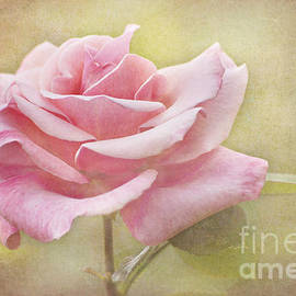 Cheryl Davis - Portrait Of A Rose
