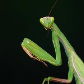 Lila Fisher-Wenzel - Praying Mantis