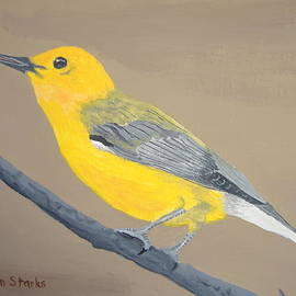 Norm Starks - Prothonotary Warbler