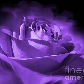 Jennie Marie Schell - Purple and Black Rose Flower