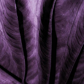 Bonnie Bruno - Purple Elephant Leaf