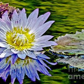 Carol F Austin - Purple Water Lily