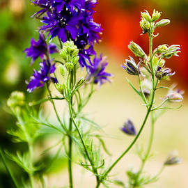 Syed Aqueel - Purple Flowers