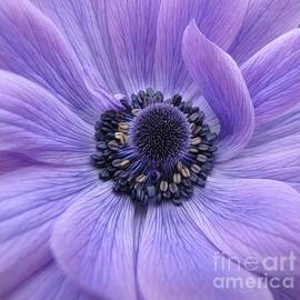 Karen Wiseman - Purple