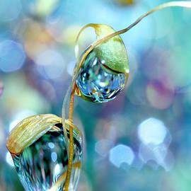 Sharon Johnstone - Rainbow Moss Drops