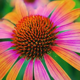 Michelle Cruz - Rainbow Petals