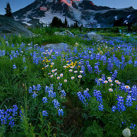 Mike  Dawson - Rainier Wildflower Dawn