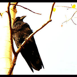 Susanne Still - Raven With Three Gold Leaves