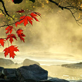 Andre Faubert - Red Maple Leafs in fog