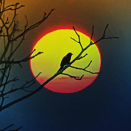 Bill Cannon - Red Winged Blackbird in the Sun