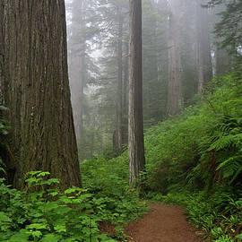 Greg Nyquist - Redwood Path