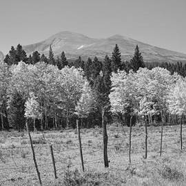 James BO  Insogna - Rocky Mountain High Country Autumn Fall Foliage Scenic View BW